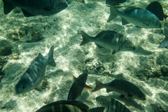 Group of  tropical fish Royalty Free Stock Photo