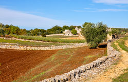 Group of Trulli, typical stone house in Apulia (Italy) Stock Photography
