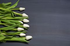 Few white tulips flowers on dark chalcboard surface. Bouquet on a blur abstract background with copy space. A group of tulip flowers gathered on a medium dark Stock Image