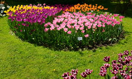 Group of tulips at the entrance to the botanical garden from Cluj Stock Images