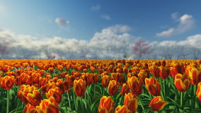 Group of tulips in the sunlight against the blue sky. Group of orange, red tulips against the sky. Spring landscape. Blurring background stock video