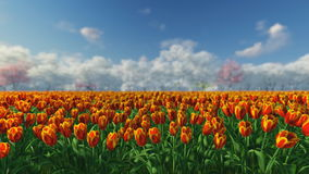Group of tulips in the sunlight against the blue sky. Group of orange, red tulips against the sky. Spring landscape. Blurring background stock footage