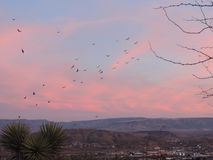 Turkey Vultures Cathartes aura aves Cathartidae Buzzards Soaring at Sunset near St George Utah in South Western Desert USA. Group of Turkey Vultures Cathartes stock images