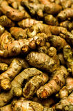 Group of Turmeric roots Stock Image