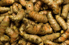 Group of Turmeric roots Royalty Free Stock Photography