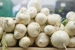 Group of turnip Royalty Free Stock Image