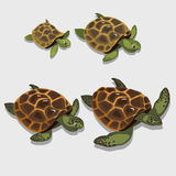 Group of turtles in a cartoon style closeup Stock Image