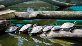 Group of turtles Stock Images