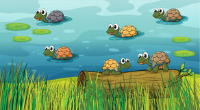 A group of turtles in the river Stock Image