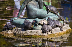 Group of turtles in the sun Royalty Free Stock Image