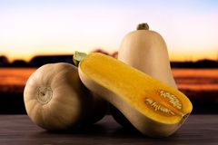 Smooth pear shaped orange butternut squash waltham with autumn field behind. Group of two whole one half of smooth pear shaped orange butternut squash waltham stock photos