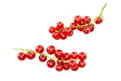 Fresh raw red currant berry isolated on white. Group of two whole red currant berry string flatlay isolated on white stock photos