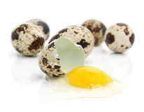 Group of uncrippled and broken quail eggs. Group of uncrippled and broken quail's eggs isolated on white background royalty free stock photography