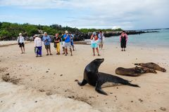 Group of unidentified tourists watching a group of sea lions. Isla Lobos, Galapagos, Ecuador, January 5, 2012: Group of unidentified tourists watching a group of Royalty Free Stock Photo