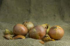 Group unpeeled onions Stock Images