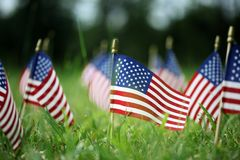 Group of American flags in green grass. Group of USA American flags in green grass Stock Image