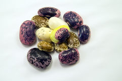 Group of variegated beans Stock Image
