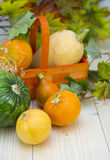Group of various kind of ripe pumpkinies Royalty Free Stock Photography