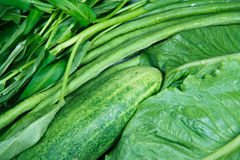 Group of vegetable Royalty Free Stock Images