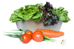 Group of Vegetable Royalty Free Stock Photo
