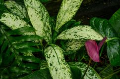 Shades of Green Tropical Plants. A group of verdant green tropical plants Stock Photography