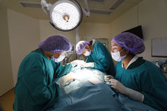 Group of veterinarian surgery in operation room Royalty Free Stock Photo