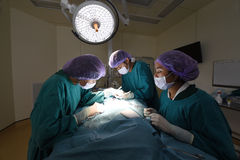 Group of veterinarian surgery in operation room Royalty Free Stock Photos