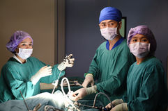 Group of veterinarian surgery in operation room Royalty Free Stock Image