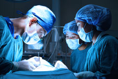 Group of veterinarian surgery in operation room Stock Photography