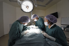 Group of veterinarian surgery in operation room Stock Images