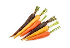 Group of vibrant variety of different colors of carrots Royalty Free Stock Photography