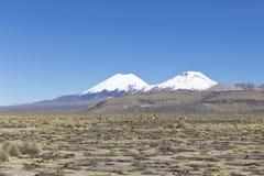 Group of vicuña (Vicugna vicugna) or vicugna Stock Photography