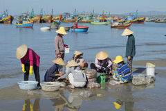 Group vietnamese women examines the catch in the fishing harbor of Mui Ne. Vietnam Royalty Free Stock Images