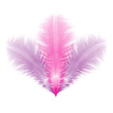 Group of violet and pink feathers Royalty Free Stock Photography