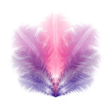 Group of violet and pink feathers Stock Image