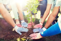 Group of volunteers hands planting tree in park. Volunteering, charity, people and ecology concept - group of volunteers hands planting tree seedling in park royalty free stock photography