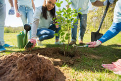 Group of volunteers hands planting tree in park Royalty Free Stock Images