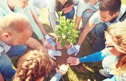 Group of volunteers planting tree in park. Volunteering, charity, people and ecology concept - group of happy volunteers planting tree in park royalty free stock images