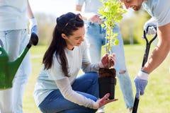Group of volunteers planting tree in park Stock Image