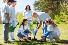 Group of volunteers planting tree in park. Volunteering, charity, people and ecology concept - group of happy volunteers planting tree and digging hole with royalty free stock image