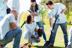 Group of volunteers planting tree in park. Volunteering, charity, people and ecology concept - group of happy volunteers planting tree and digging hole with Royalty Free Stock Images