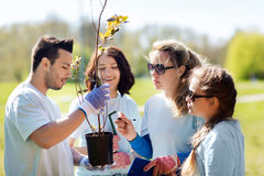 Group of volunteers planting trees in park. Volunteering, charity, people and ecology concept - group of volunteers with clipboard planting trees in park stock image