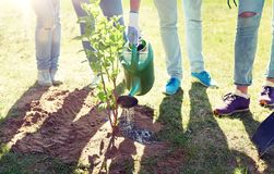 Group of volunteers planting and watering tree royalty free stock images