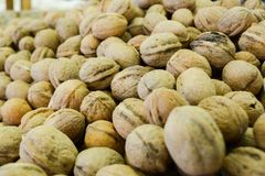 A group of walnuts Royalty Free Stock Photos