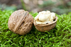 Group of walnuts Stock Photography