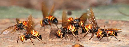 A group of wasps macro Stock Image