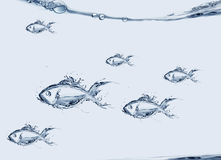 Group of Water Fish Swimming Stock Photo