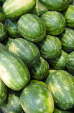 Group of Watermelons. Set of fresh watermelons at the summer market Stock Photography