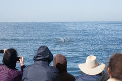 Group of Whale watching people taking photos of a whale Stock Photo