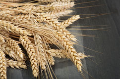 Group of wheat ears. Close up shoot Stock Photo